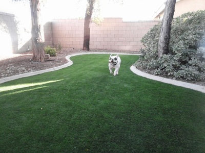 Dogs love EasyTurf artificial grass
