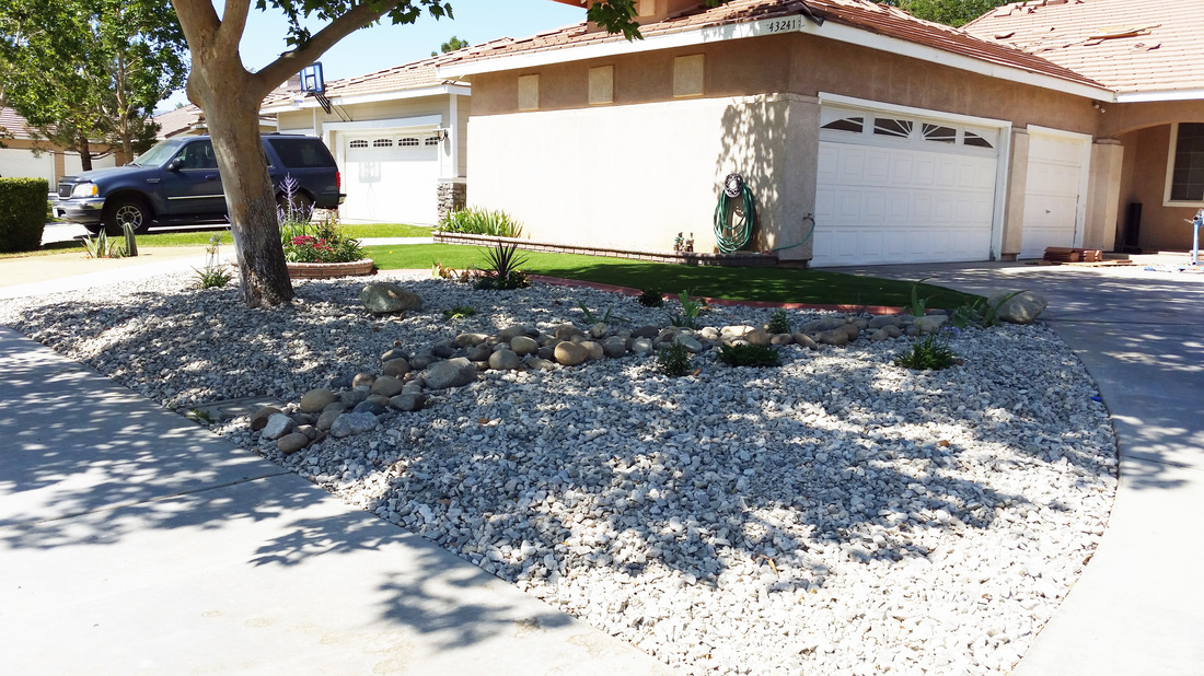 Xeriscape drought tolerant lawn alternative