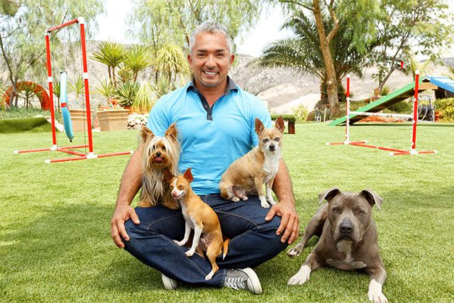 Cesar Millan with EasyTurf Artificial grass